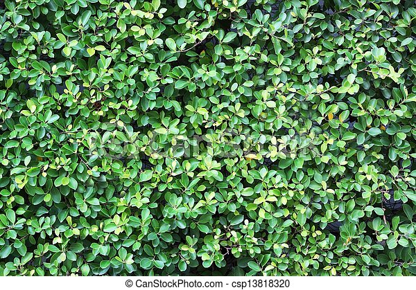 Green leaves wall background - csp13818320