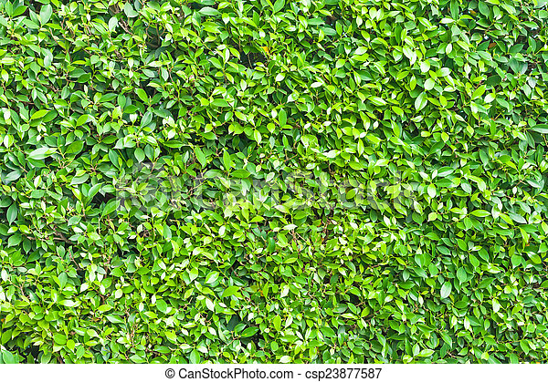 Green leaves wall background texture - csp23877587