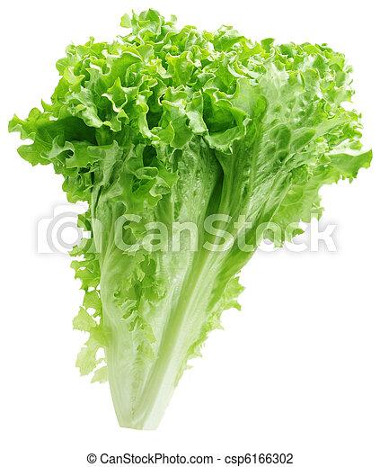 Green Lettuce - csp6166302