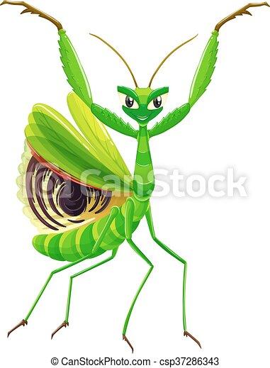 Green mantis on white background - csp37286343