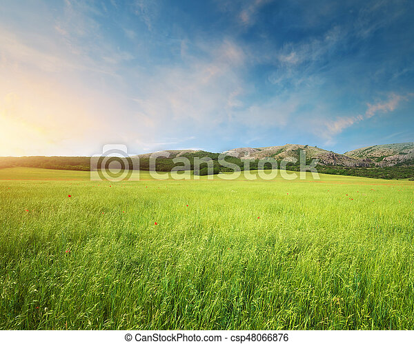 Green meadow in mountain. - csp48066876
