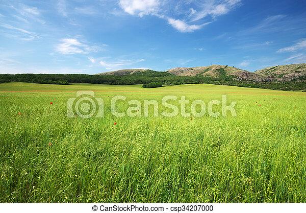 Green meadow in mountain.  - csp34207000