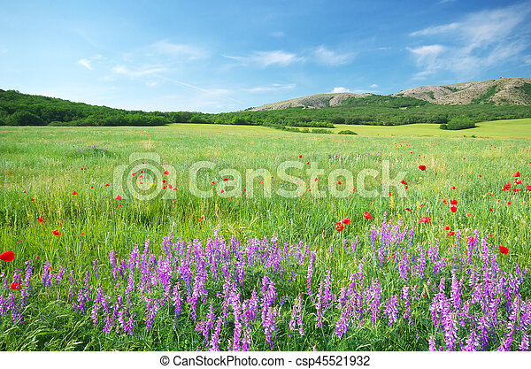 Green meadow in mountain. - csp45521932