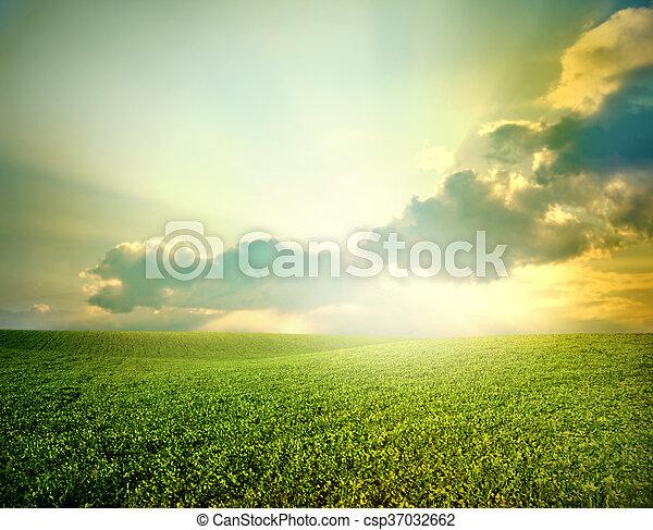 Green meadow - csp37032662