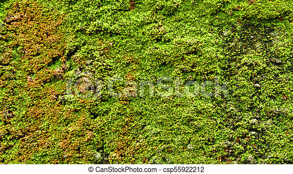Green moss on old concrete wall - csp55922212