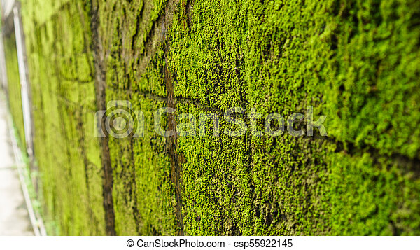 Green moss on old concrete wall - csp55922145