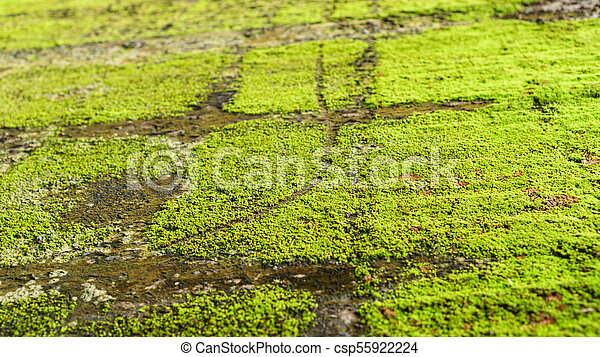 Green moss on old concrete wall - csp55922224