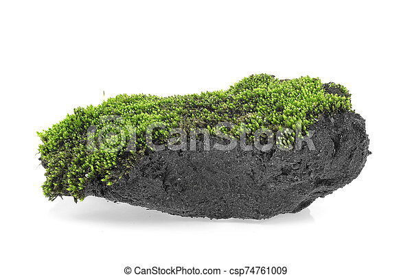 Green moss on pile of soil on a white background - csp74761009