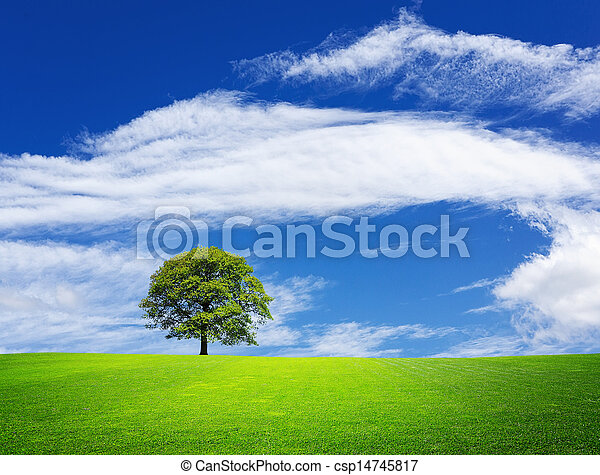 Green nature landscape - csp14745817