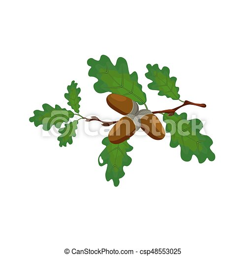 Green oak branch with acorns. Volumetric drawing without a mesh and a gradient. Isolated on white background. illustration - csp48553025