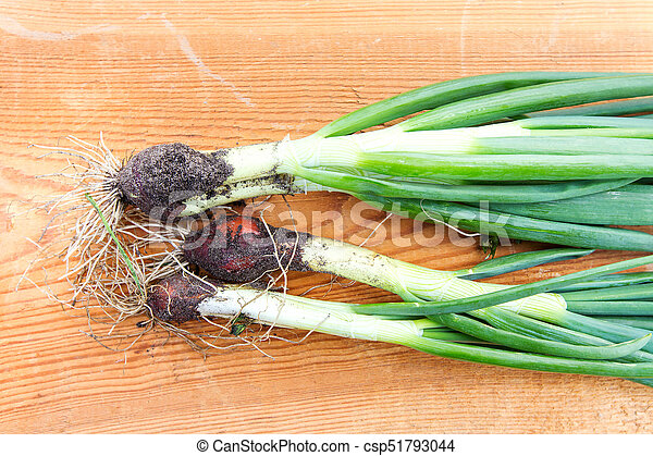 green onions on the table - csp51793044