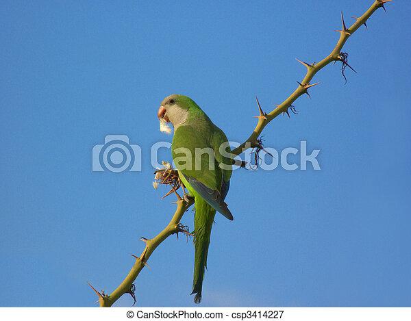 Green Parrot - csp3414227