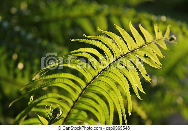 Green - csp9363548