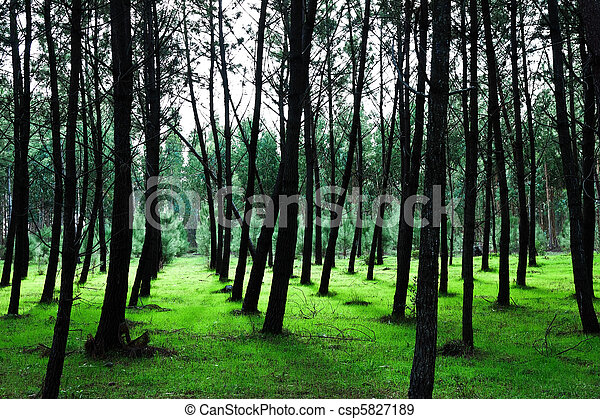 Green Pine Tree Background II - csp5827189