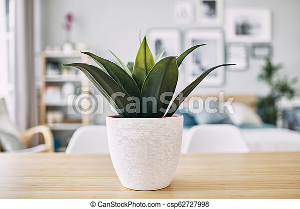 green plant in a white pot on the table. Close up - csp62727998