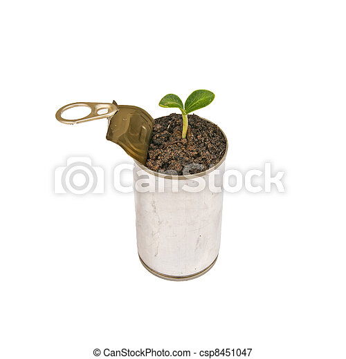 Green plant in can isolated - csp8451047