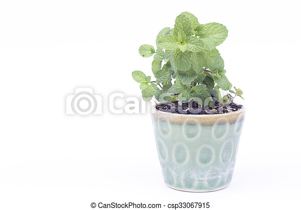 Green plant in pot isolated on white background - csp33067915