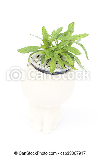 Green plant in pot isolated on white background - csp33067917