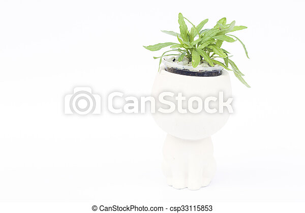 Green plant in pot isolated on white background - csp33115853