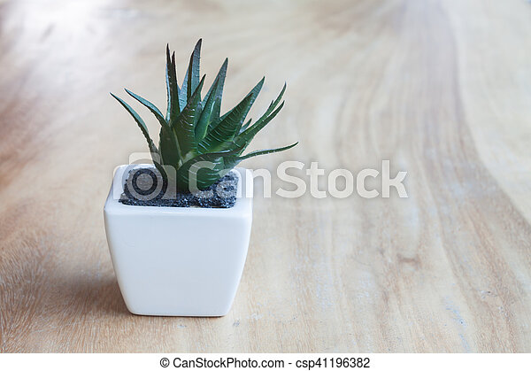 Green plant in pot on wooden table - csp41196382