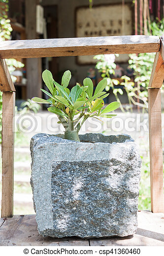 Green plant in stone pot with sunshie - csp41360460
