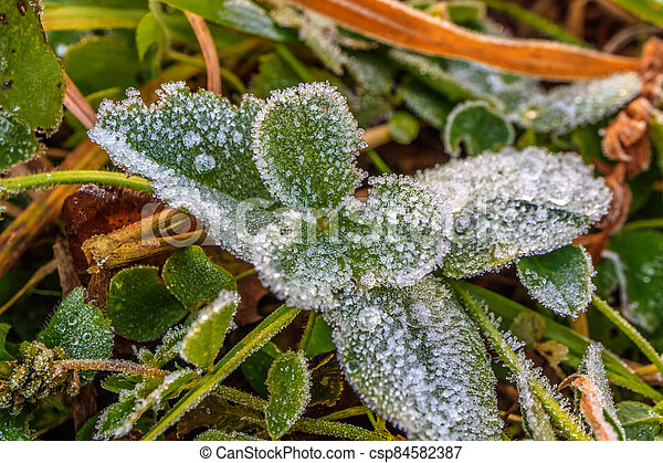 green plant in the fall where large drops of frozen dew - csp84582387