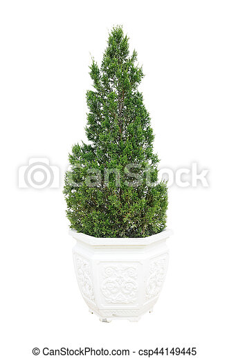 Green plant in white pot on white background - csp44149445