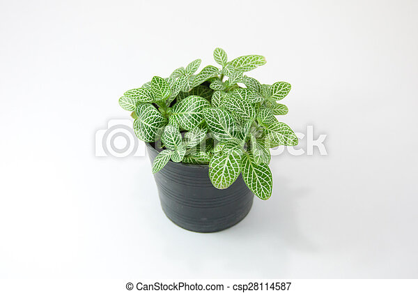 green plant isolated on white background - csp28114587
