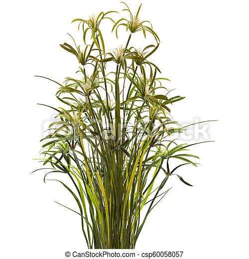 green plant isolated on white background - csp60058057