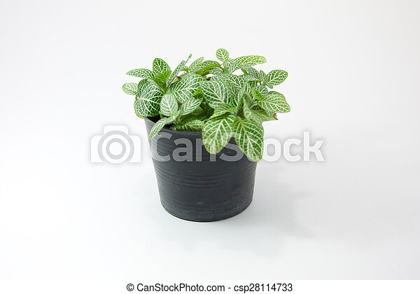 green plant isolated on white background - csp28114733