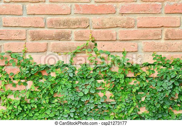 Green plant on brick wall - csp21273177