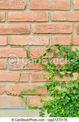 Green plant on brick wall - csp21273178