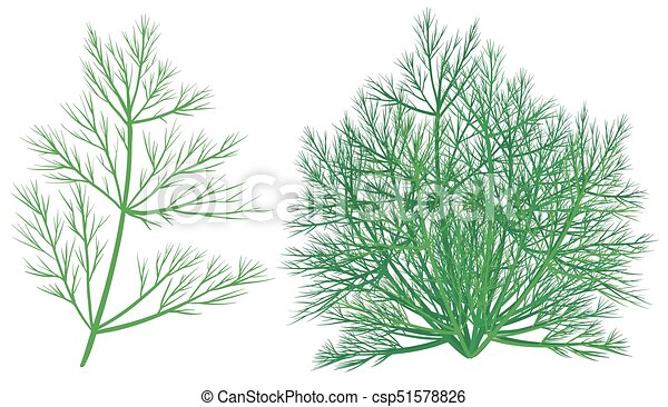 Green plant on white background - csp51578826