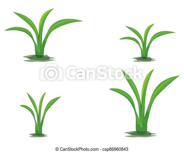 green plant on white background vector design - csp86960843