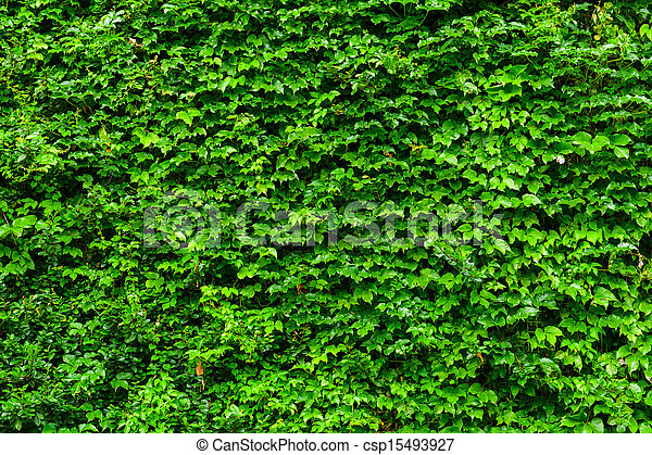 green plant wall. Black Bedroom Furniture Sets. Home Design Ideas