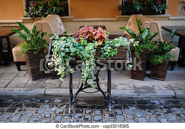 green plants outside in a cafe of Lviv - csp33018365