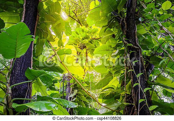 Green Pothos on tree in the garden - csp44108826