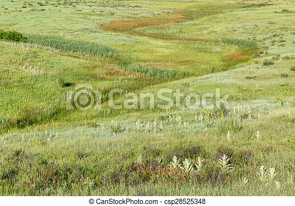 green prairie at Rocky Mountains foothills - csp28525348