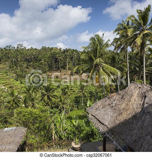 Green rice fields on Bali island, Jatiluwih near Ubud, Indonesia - csp32067061