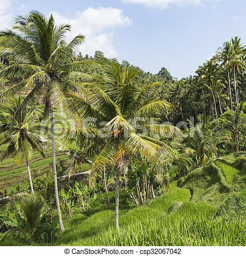 Green rice fields on Bali island, Jatiluwih near Ubud, Indonesia - csp32067042