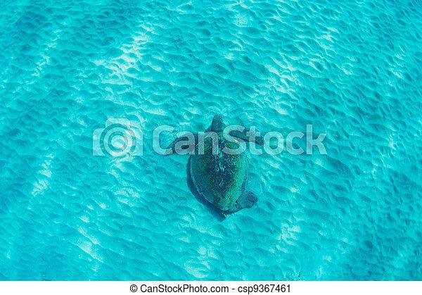 green sea turtle underwater - csp9367461