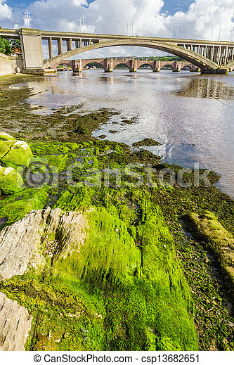 Green seaweed under bridges in Berwick-upon-Tweed - csp13682651