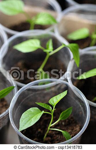 Green seedling growing out of soil - csp13418783