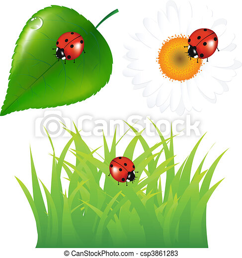 Green Set With Ladybug - csp3861283