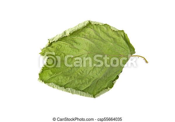 green sluggish leaf isolated on white background - csp55664035