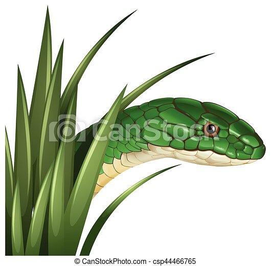 green snake behind the grass illustration clip art vector search rh canstockphoto com  grass vector artwork