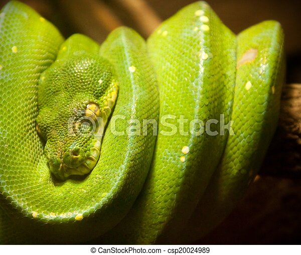 https://comps.canstockphoto.com/green-snake-pictures_csp20024989.jpg