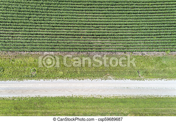 green soybean field aerial view - csp59689687