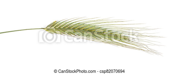 green spikelets on a white background, isolated - csp82070694