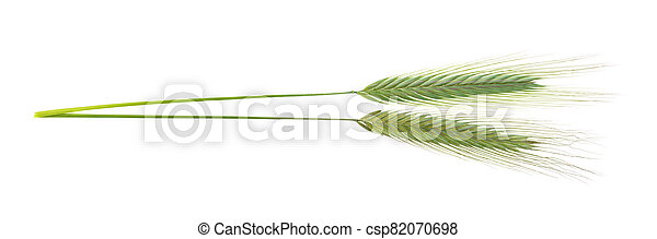 green spikelets on a white background, isolated - csp82070698